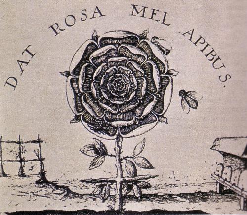 La rosa nei miti nelle religioni nelle leggende e nei - La rosa racconta la vita dei divi ...
