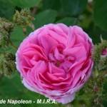 10_4chapeau_de_napoleon_fiore