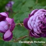 2_5_cardinal-de-richelieu