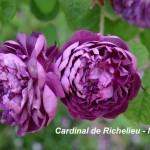 2_5_cardinal-de-richelieu_2016small